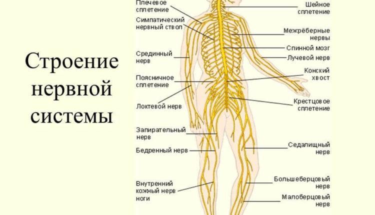 vitaminy-dlja-nervnoj-sistemy-8